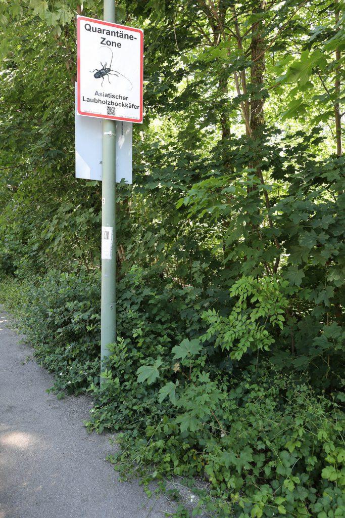 Eschen-Fällen Jagdhornstraße
