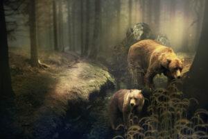 Braunbären im Wald