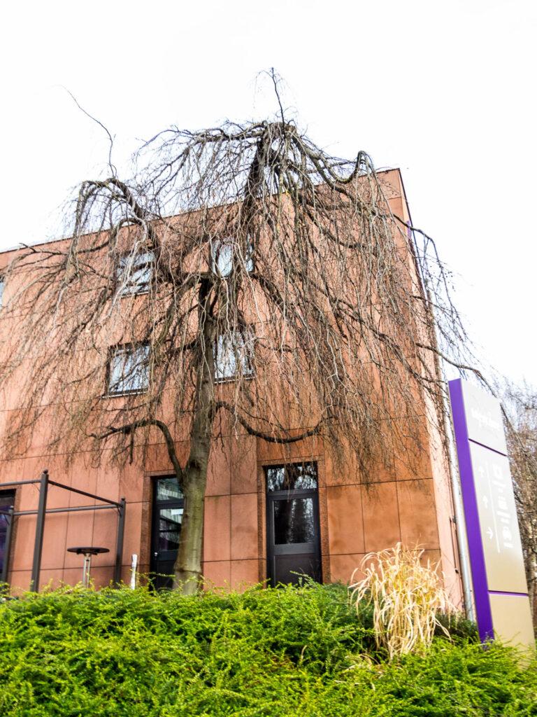 Baum am Mercure-Hotel