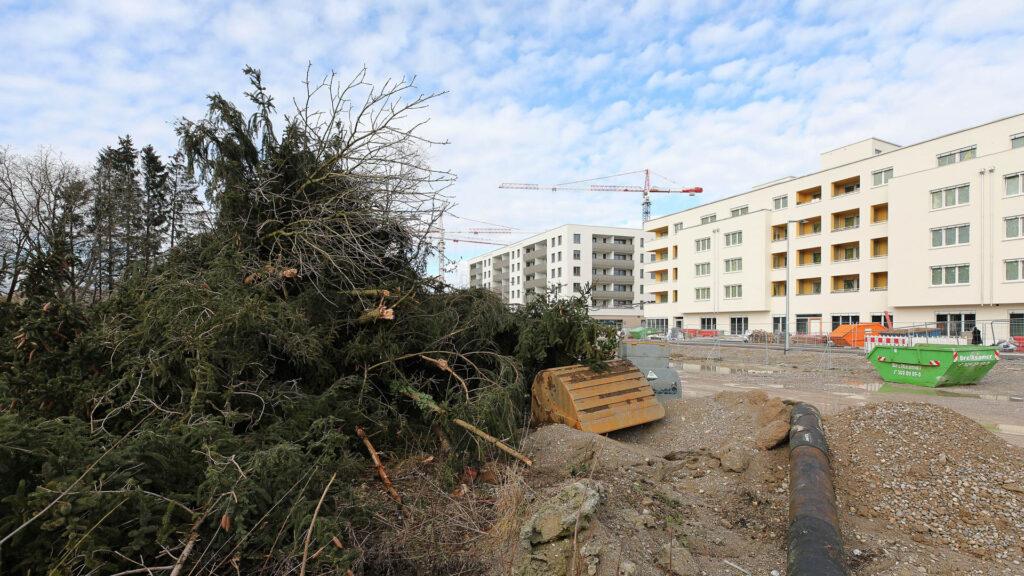 Baumfällung am Alexisquartier