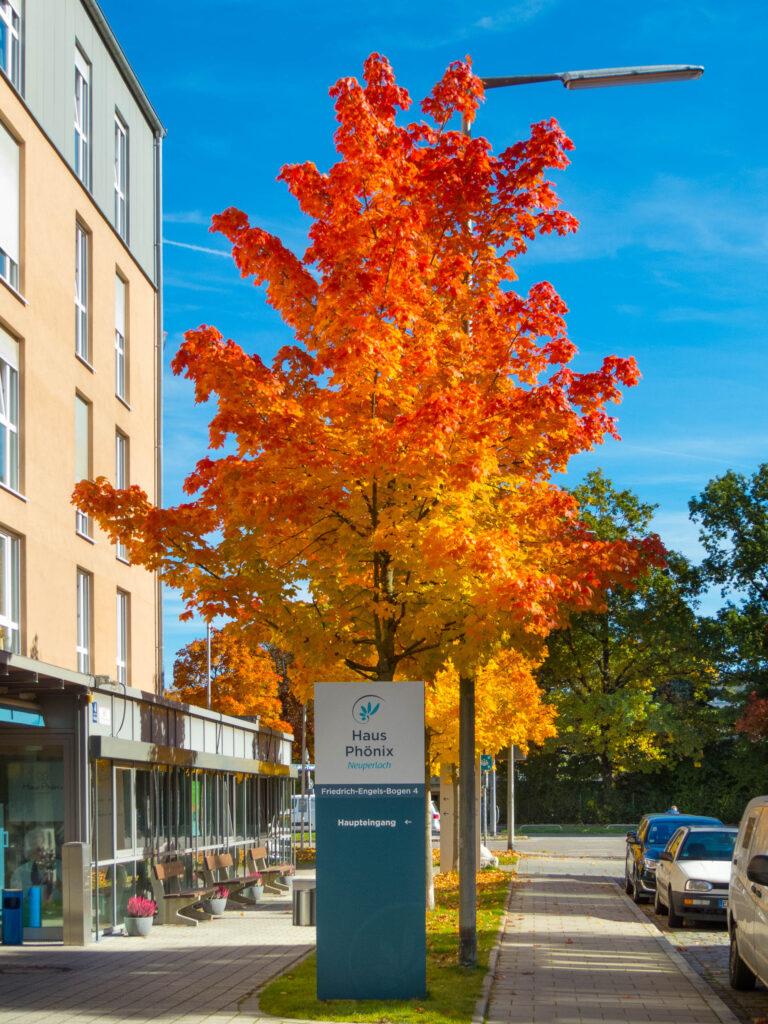 Herbst am Phönix-Pflegeheim